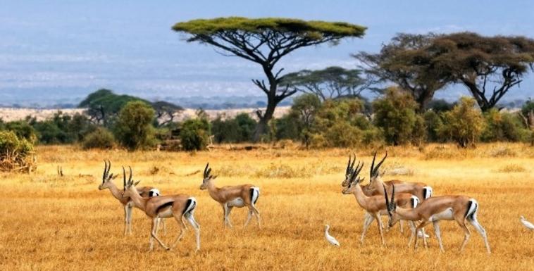 7 Hal Yang Perlu Anda Ketahui Sebelum Bepergian ke Kenya