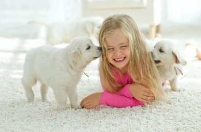 Remaja Tumbuh Dengan Anjing Keluarga: Memaksimalkan Ketahanan di Masa Dewasa